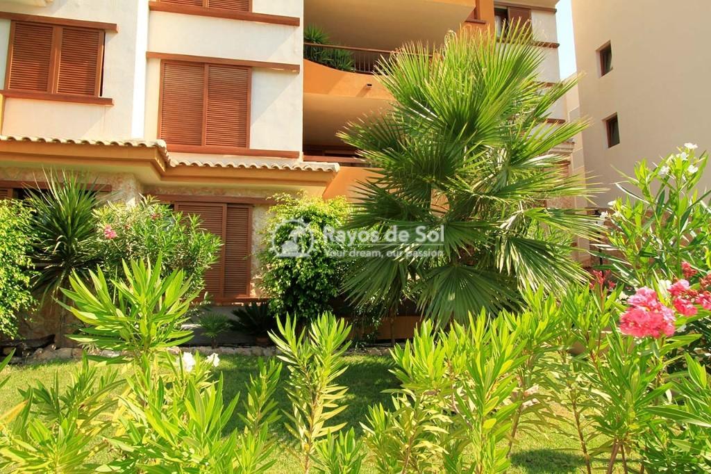Apartment  in Punta Prima, Orihuela Costa, Costa Blanca (recoleta3-3d) - 29