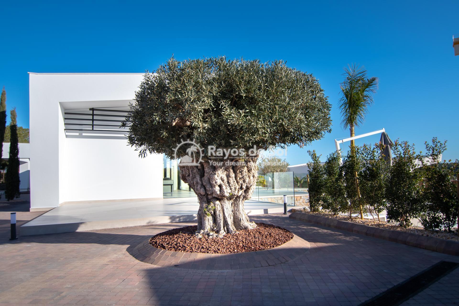 Villa  in Las Colinas, Orihuela Costa, Costa Blanca (lcv-mimosa) - 53