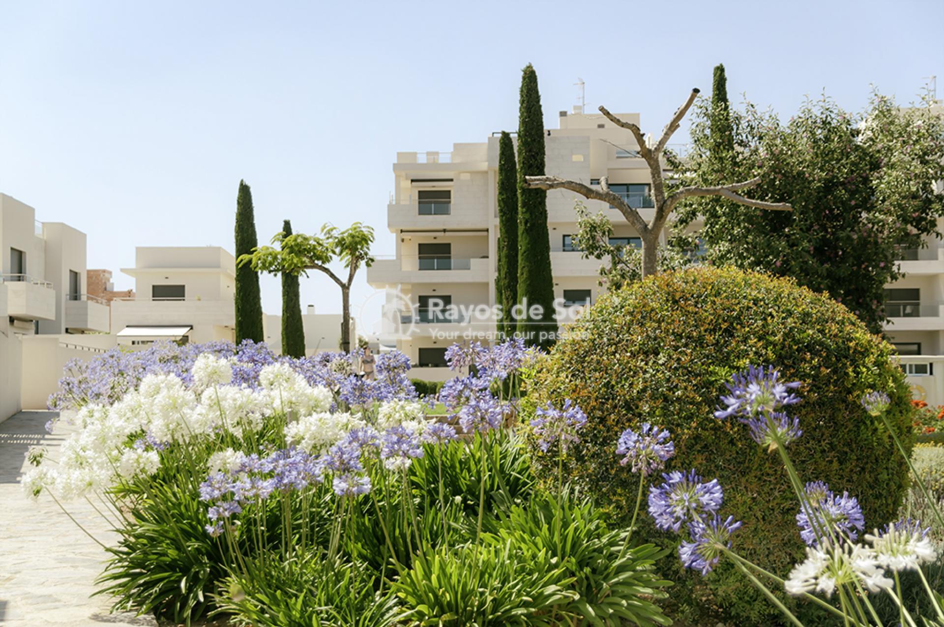 Apartment  in Los Dolses, Orihuela Costa, Costa Blanca (montesolana-tipo-2d) - 38