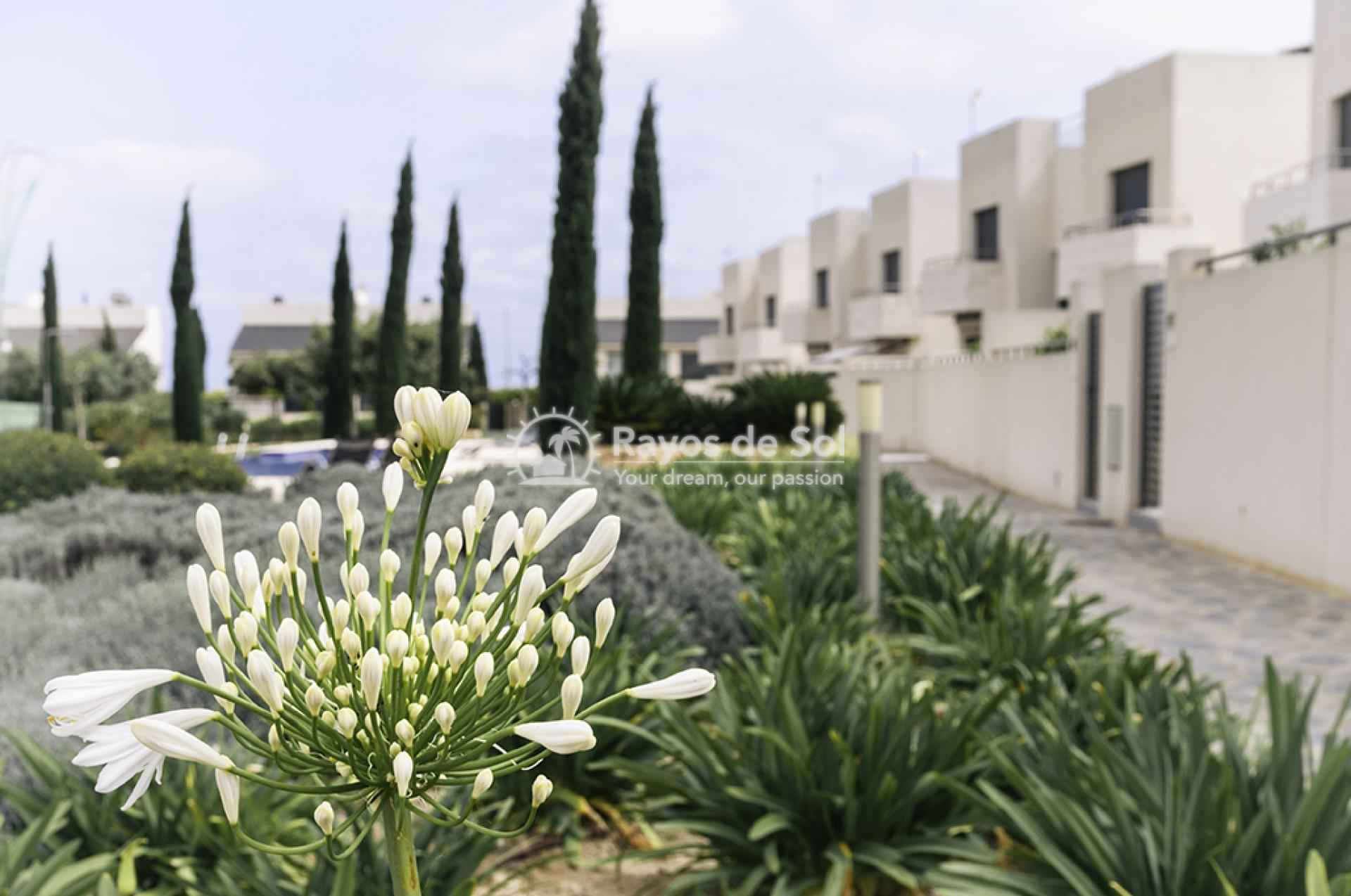 Penthouse  in Los Dolses, Orihuela Costa, Costa Blanca (montesolana-ph-3d) - 33