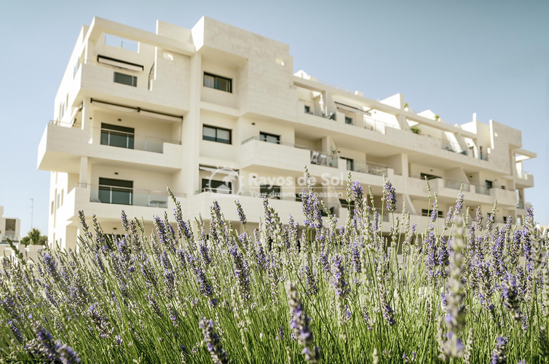 Apartment  in Los Dolses, Orihuela Costa, Costa Blanca (montesolana-tipo-3d) - 15