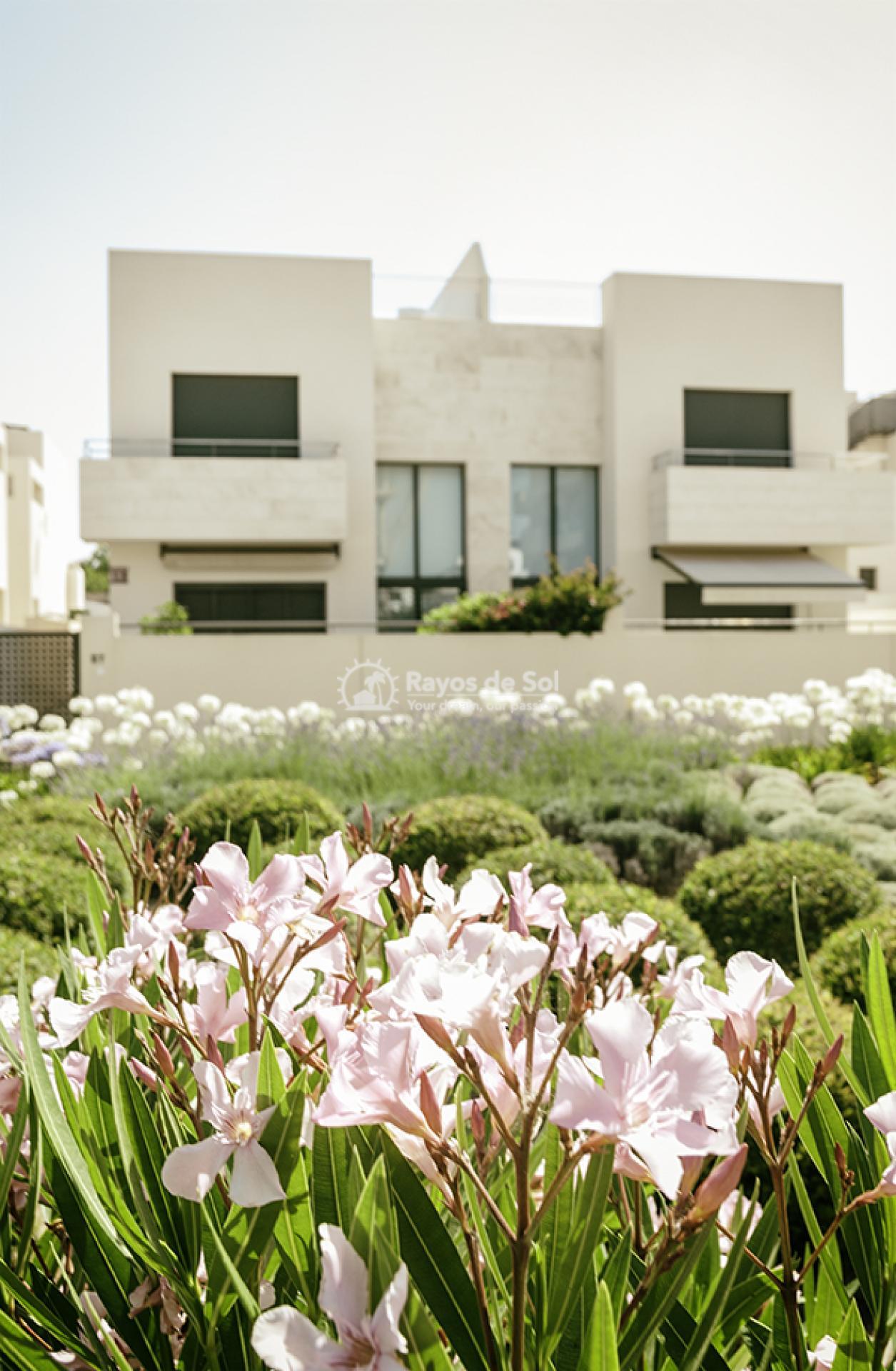 Apartment  in Los Dolses, Orihuela Costa, Costa Blanca (montesolana-tipo-3d) - 22