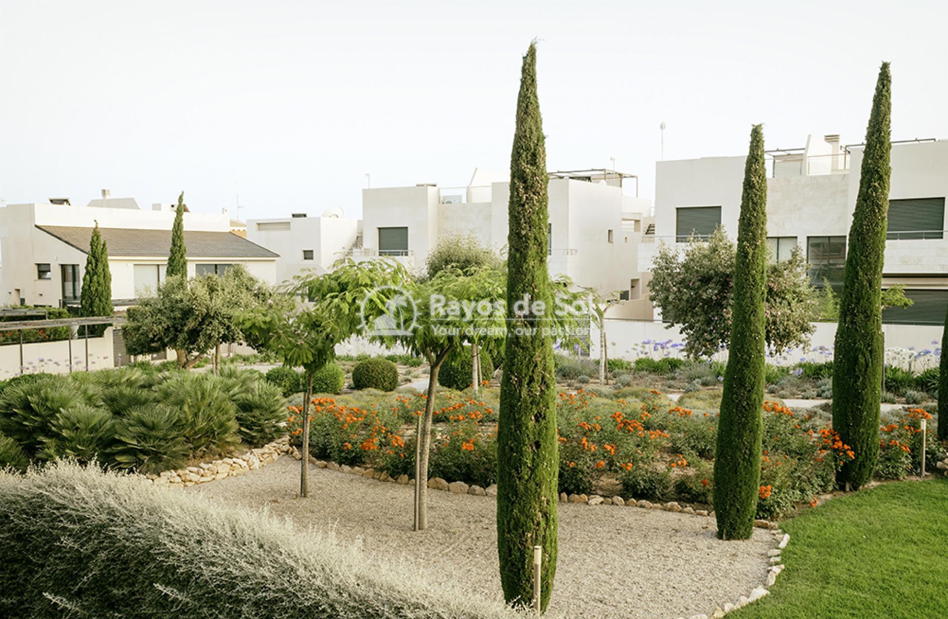 Apartment  in Los Dolses, Orihuela Costa, Costa Blanca (montesolana-tipo-3d) - 36