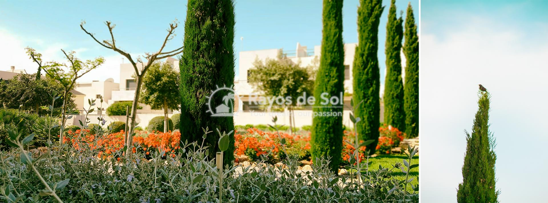 Apartment  in Los Dolses, Orihuela Costa, Costa Blanca (montesolana-tipo-3d) - 38