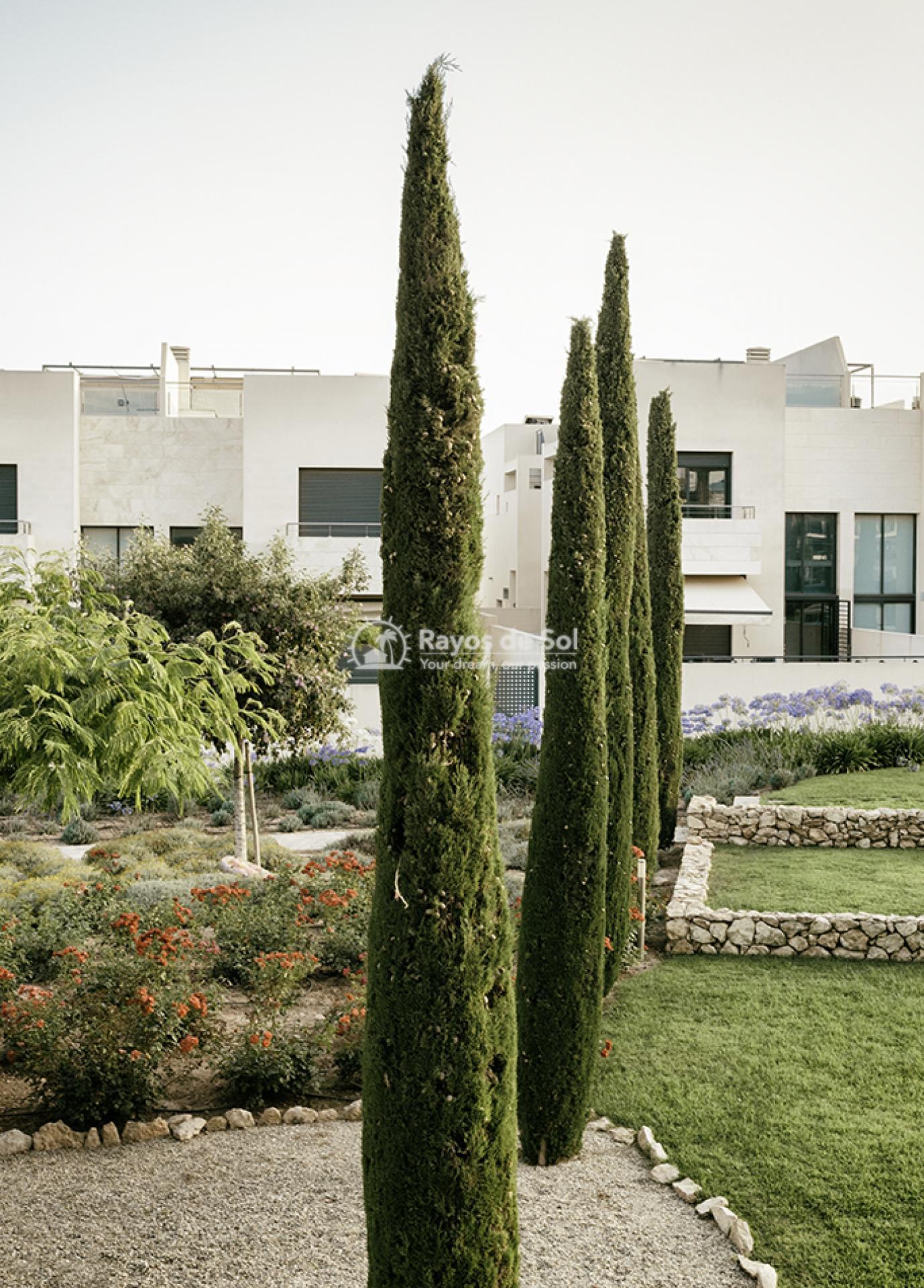 Apartment  in Los Dolses, Orihuela Costa, Costa Blanca (montesolana-tipo-3d) - 39