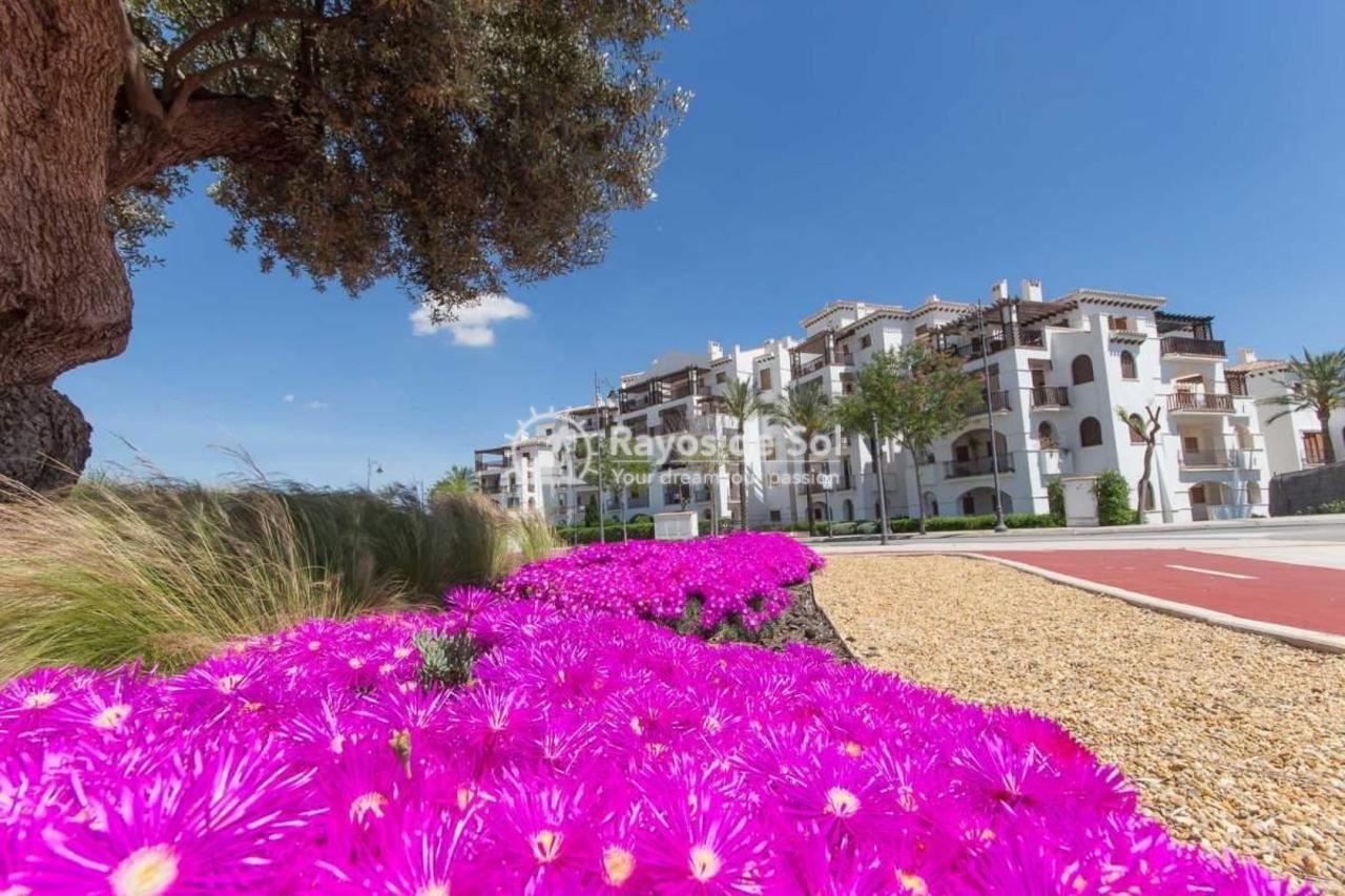 Apartment  in El Valle Golf Resort, Costa Cálida (561225svm) - 19